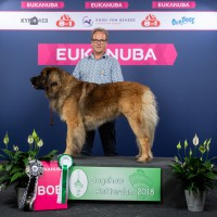 BEST_OF_BREED_92_HR_ROTTERDAM_2018_KYNOWEB_KY3_3162_20180909_11_31_42