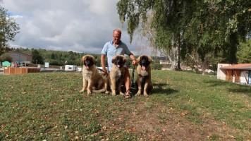 3 pups cluny